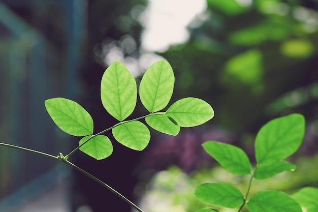 Feche acima das folhas verdes no ramo, tom vintage