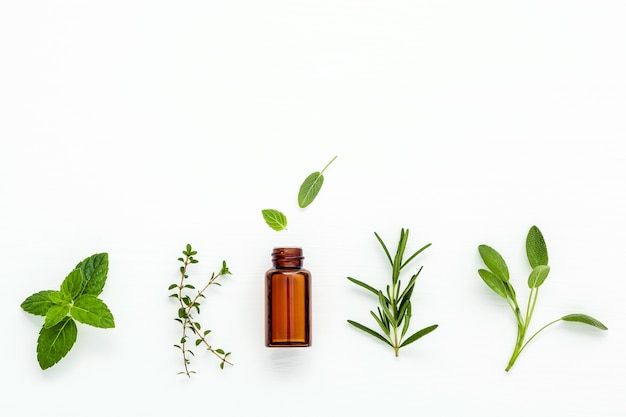 Feche acima das garrafas de óleos essenciais com as ervas frescas no fundo branco.