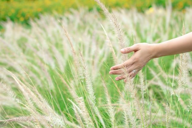 Feche acima das mãos da mulher que tocam na grama no prado.