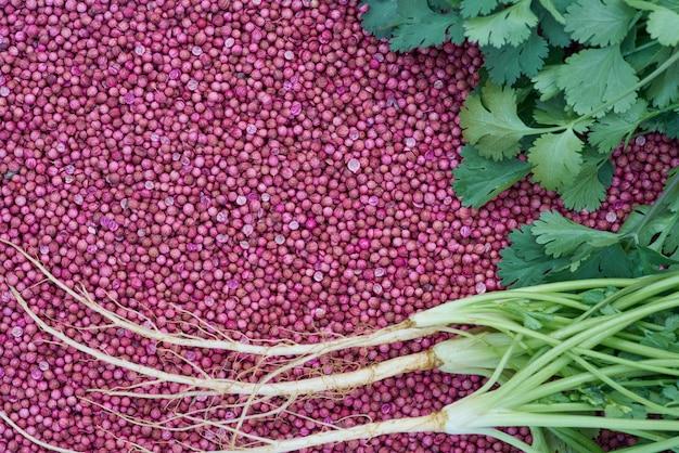 Feche acima das raizes e do coentro frescas do coentro sae em sementes de coentro secadas.