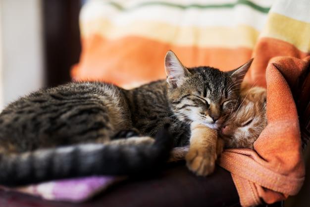 Feche acima de dois gatos bonitos que dormem na poltrona.