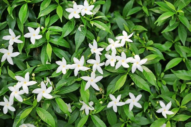 Feche acima do arbusto floral