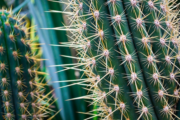Feche acima do cacto verde espinhoso com espinhos longos.