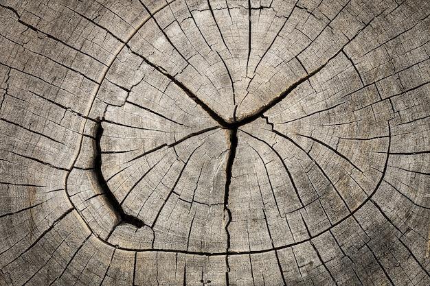 Feche acima do coto de madeira cortado com quebras e anéis anuais como o teste padrão.