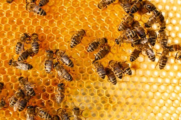 Feche acima do favo de mel na colméia de madeira com abelhas nele