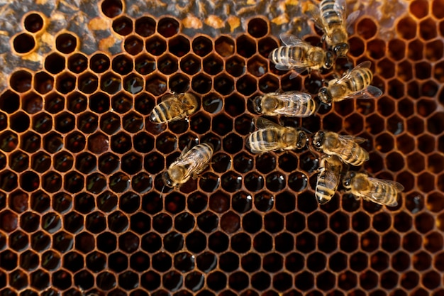 Feche acima do favo de mel na moldura de madeira com abelhas nele