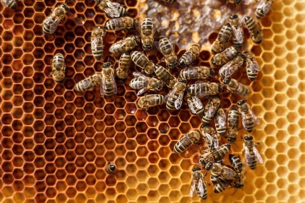 Feche acima do favo de mel no frame de madeira com as abelhas nele. conceito de apicultura.