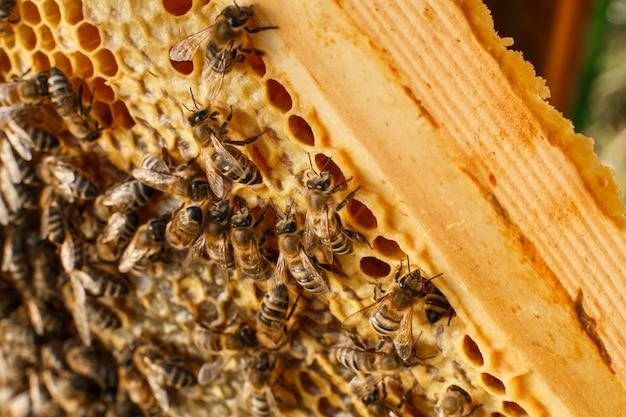 Feche acima do favo de mel no quadro de madeira com abelhas nele. apicultura.