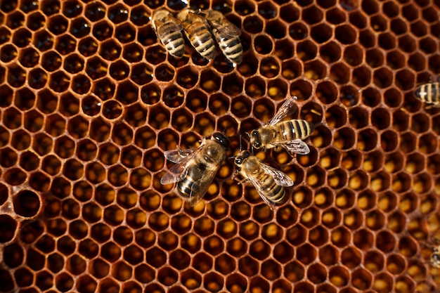 Feche acima do favo de mel no quadro de madeira com abelhas nele.