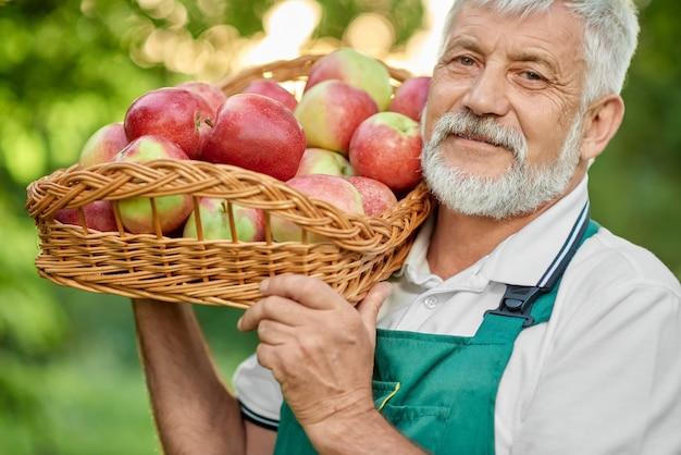 Feche acima do fazendeiro idoso que mantém a cesta completa de maçãs frescas.