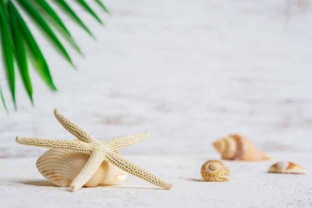 Feche acima do foco seletivo de shell da estrela do mar e do mar com fundo em folha de palmeira verde.