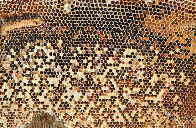 Feche acima do fundo fresco do favo de mel.