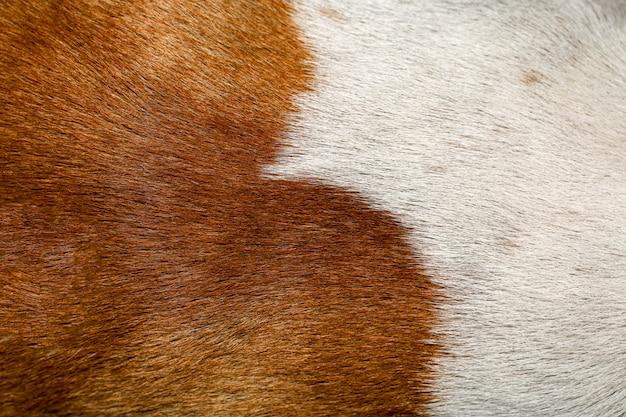Feche acima do fundo marrom e branco da textura da pele do cão
