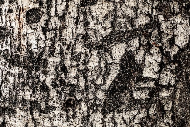 Feche acima do fundo seco do sumário da textura da casca de árvore.