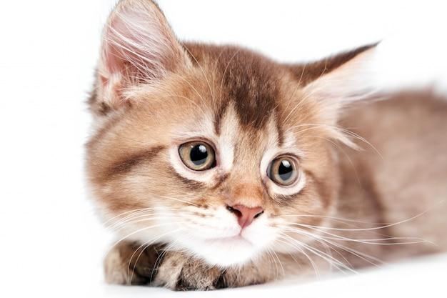 Feche acima do gatinho de encontro isolado no branco.