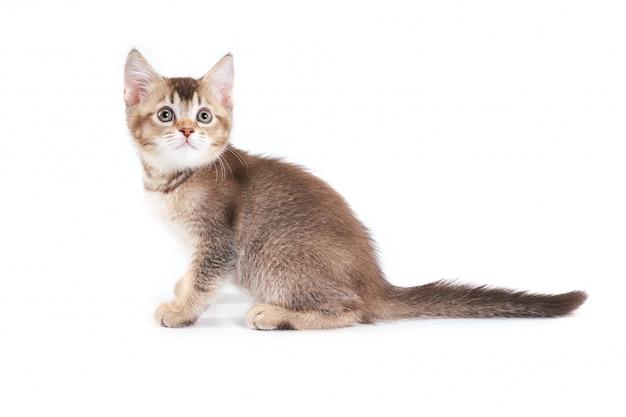 Feche acima do gatinho marrom adorável.
