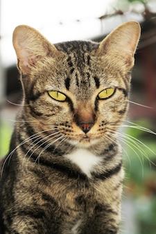 Feche acima do gato cinzento olhe-me