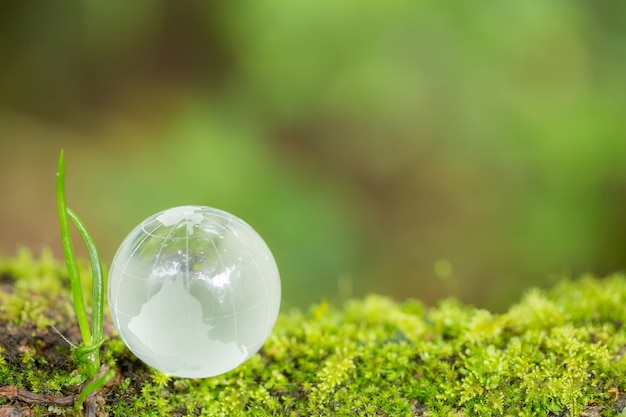 Feche acima do globo de vidro na floresta.