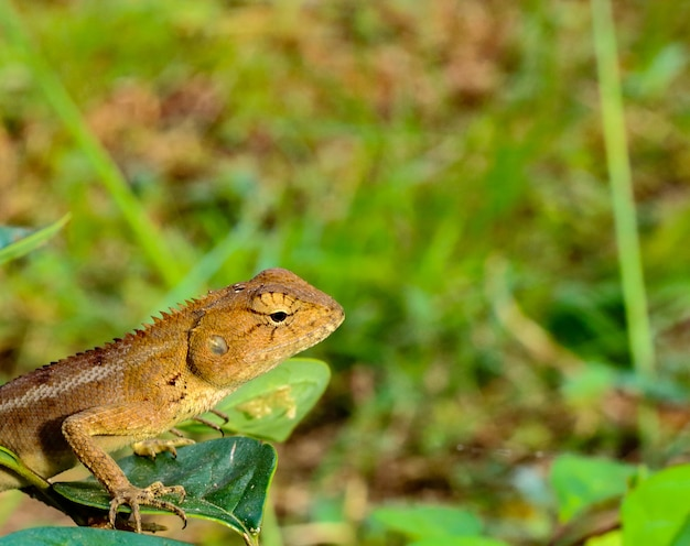 Feche acima do lagarto na árvore do ramo no jardim com espaço da cópia e borre o fundo.