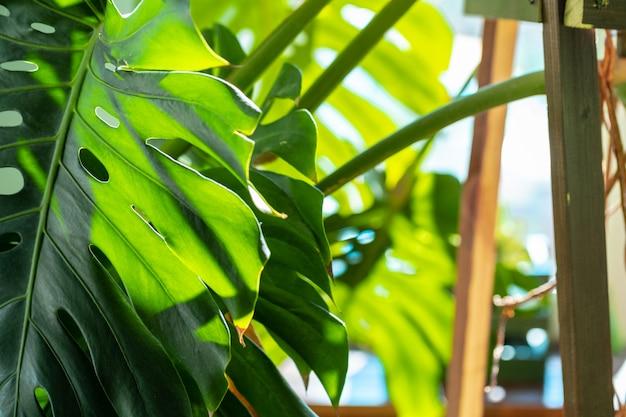 Feche acima do ramo de planta de casa com folhas na luz solar