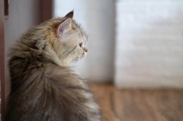 Feche acima do retrato um gato sentado ao lado da porta olhando e esperando por alguém