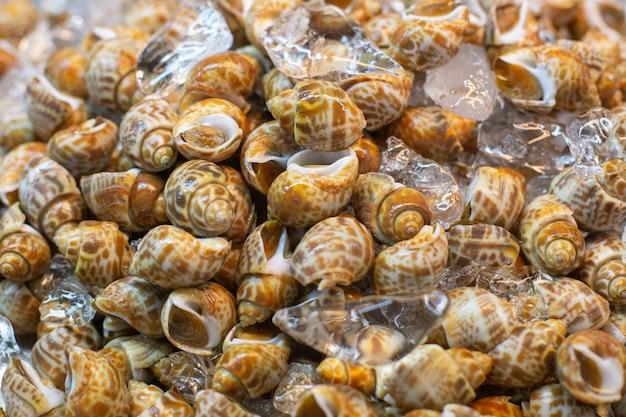Feche acima do shell manchado da babilônia no mercado de frutos do mar.