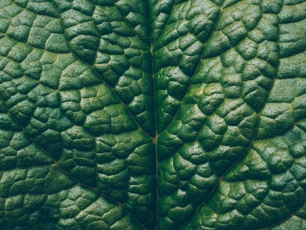 Feche acima do teste padrão bonito da folha da mola como o fundo. textura abstrata macro da folha da natureza.