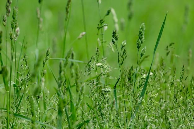 Feche acima do tiro da grama em um campo