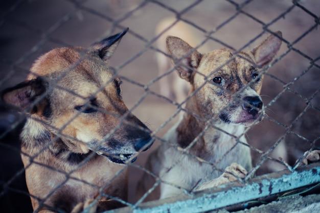 Feche acima dos cães dispersos. cães abandonados sem abrigo estão mentindo na fundação.