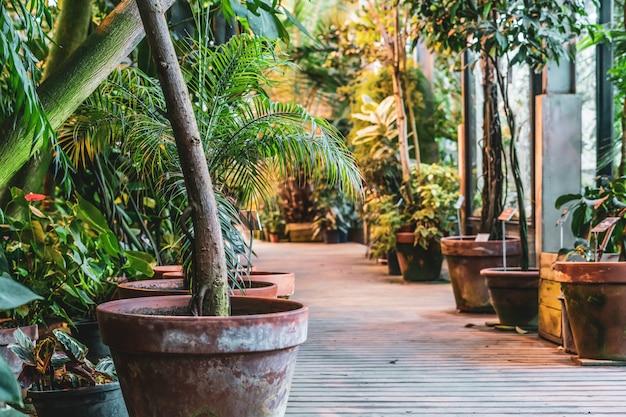Feche acima dos potenciômetros do jardim com plantas ou venda no mercado orgânico da loja. plantas de viveiro