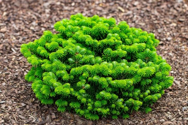Feche arbustos e gramados verdes