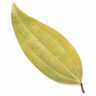 Feche as folhas de louro isoladas no fundo branco, com vista superior e copie o espaço.