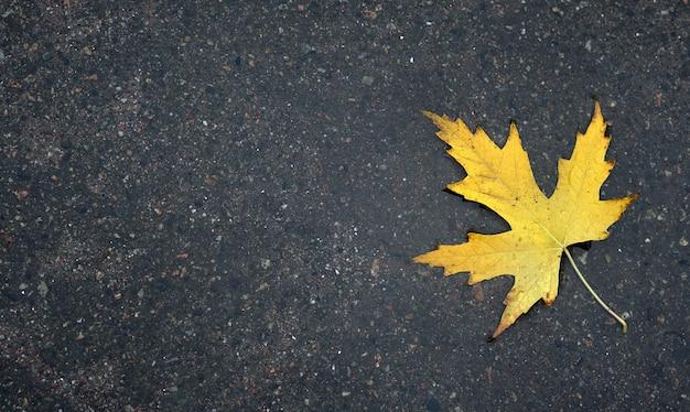Feche as folhas de outono amarelas na poça.