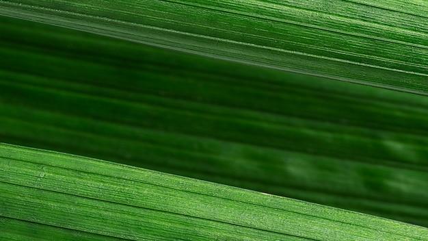 Feche as folhas verdes, fundo diagonal