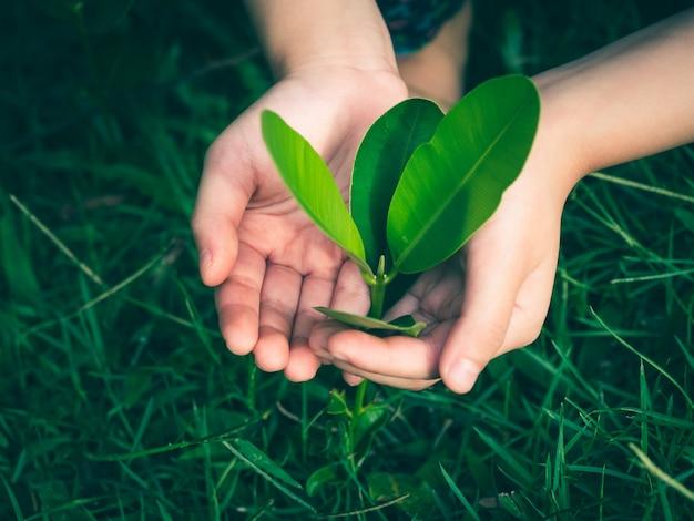 Feche as mãos da criança segurando e cuidando de uma jovem figueira no chão.