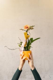 Feche as mãos de mulher segurando uma orquídea em vaso amarela isolada.