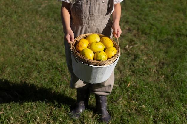 Feche as mãos segurando um balde com frutas
