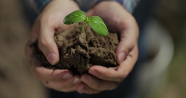Feche as mãos segurando uma muda de jovem árvore pequena conceito conservação da natureza agricultura no início da temporada de plantio