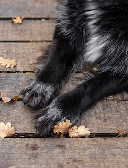 Feche as patas do cachorro ao ar livre