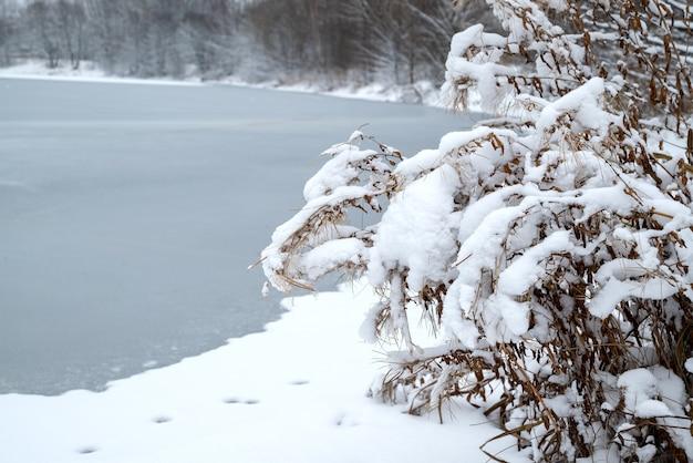 Feche as plantas cobertas de neve na margem da paisagem de inverno do lago congelado