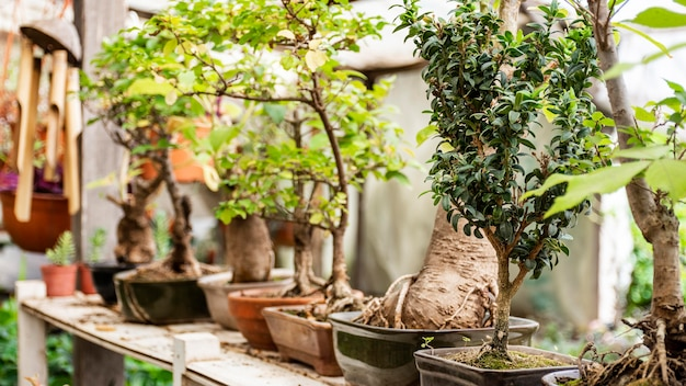 Feche as plantas no jardim
