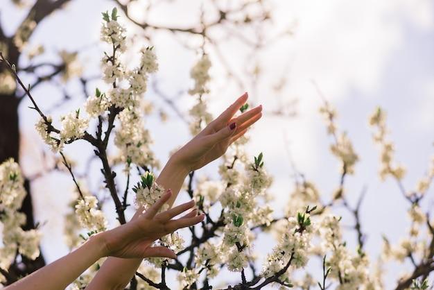 Feche de belas mãos femininas segurando um galho de árvore frutífera em flor e flores.