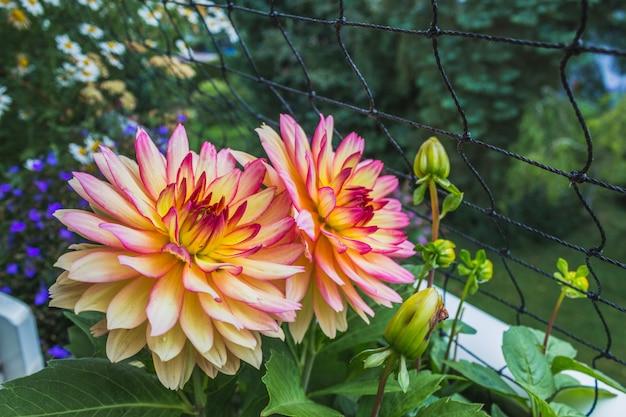 Feche de flores e folhagens na varanda.