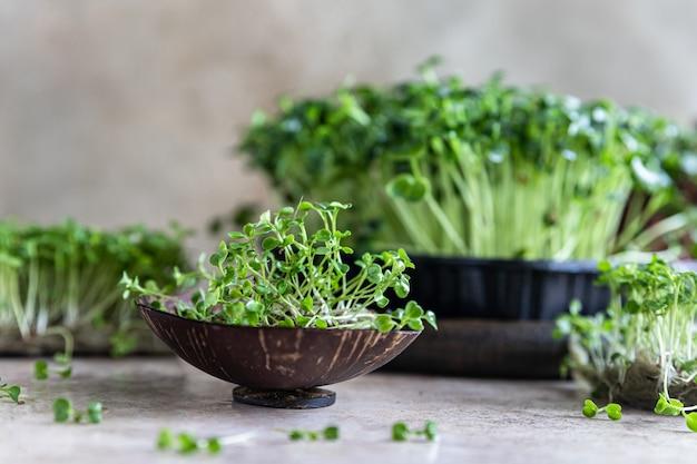 Feche de microgreen de rúcula. conceito de superalimento orgânico. estilo de vida saudável.