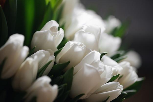 Feche foto de tulipas vermelhas e brancas. conceito de primavera