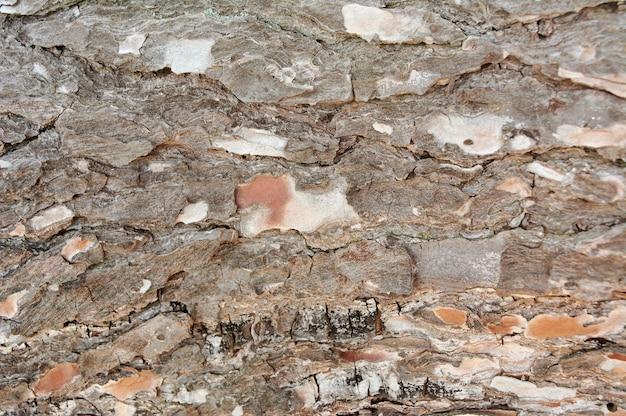 Feche fundos de textura de madeira marrom, textura de casca de árvore de pinho, com fundo de padrões naturais.