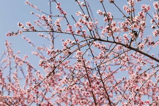 Feche galhos de árvores com flores desabrochando