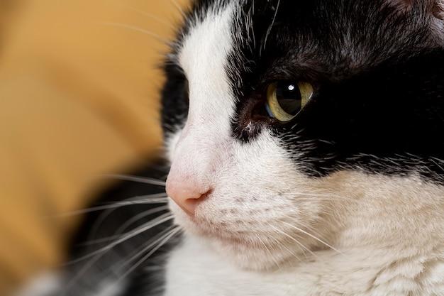 Feche o adorável gato dentro de casa