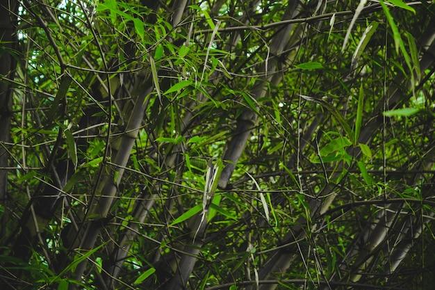 Feche o bambu