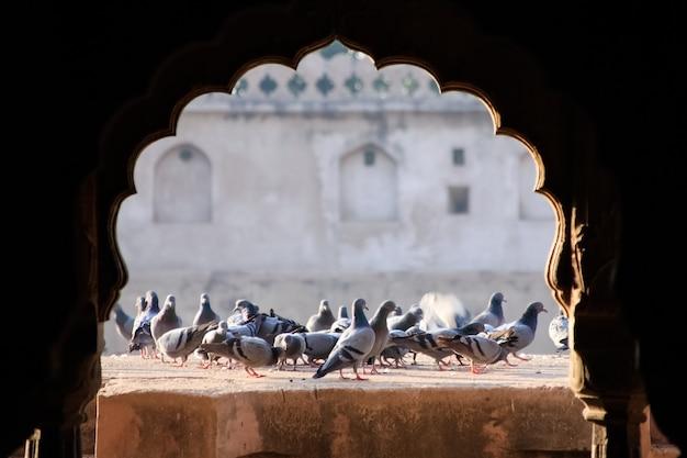 Feche o bando de pombos no fundo da parede velha.